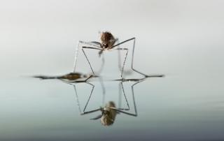 Πρόγραμμα Καταπολέμησης Κουνουπιών στο Νομό Λασιθίου 2014 – 5η εφαρμογή
